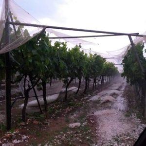 Αγρότες Παγγαίου:  Πως  μιλάμε για πληρωμές τέλη Ιανουαρίου;