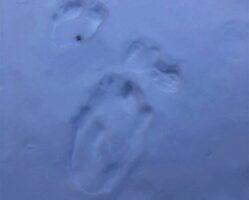 Έκτακτή ανακοίνωση για τις αρκούδες στην Π.Ε. Καβάλας